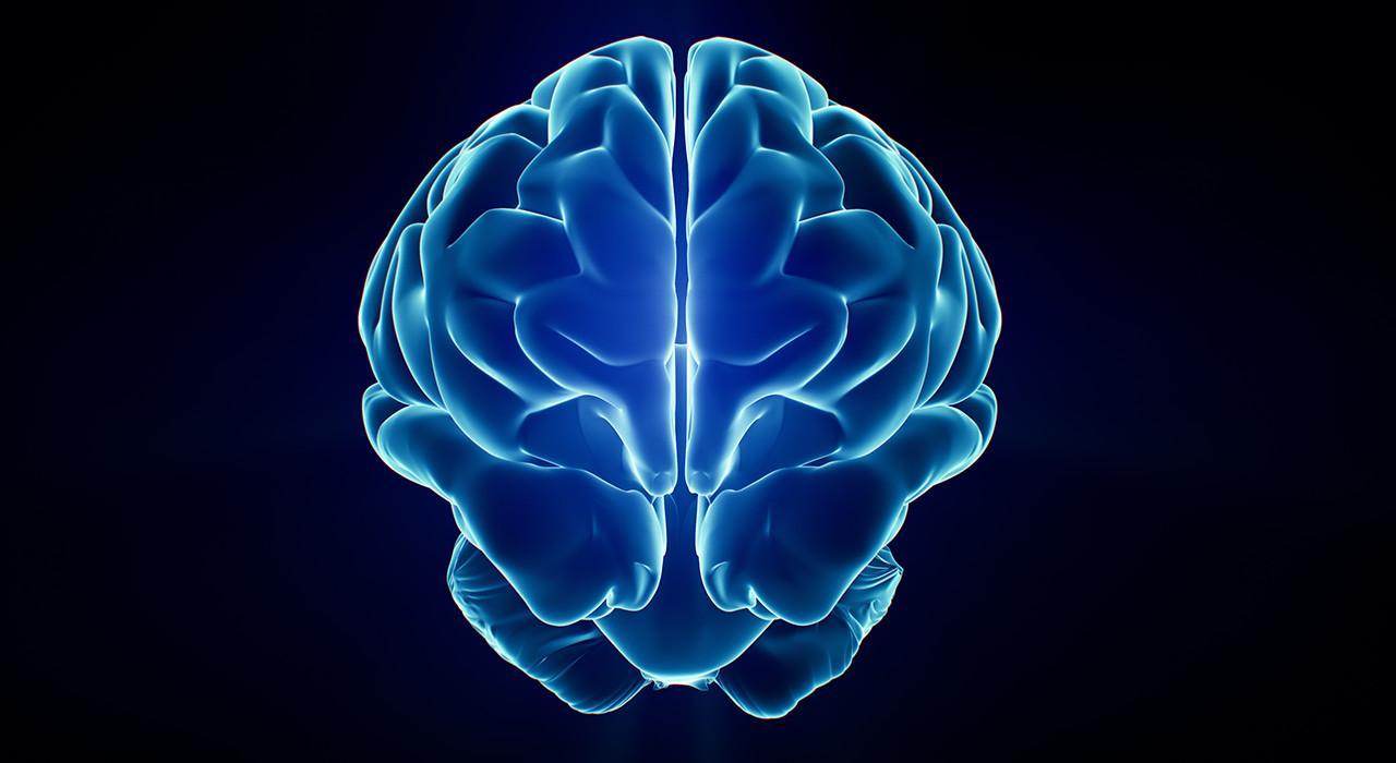 Especialización en Acción Motriz en los Procesos Cerebrales del Aprendizaje