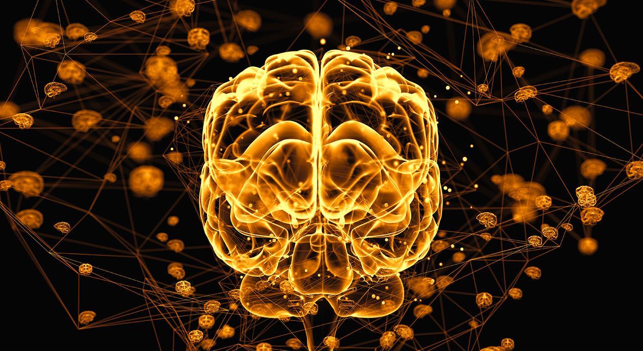 Formación en Acción Motriz en los Procesos Cerebrales del Aprendizaje