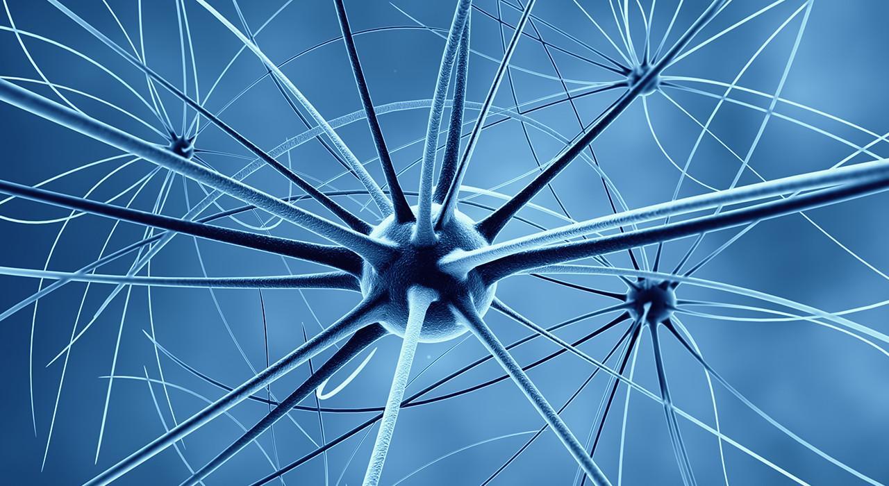 Especialización en Emociones en los Procesos Neuroeducativos desde la Acción Motriz