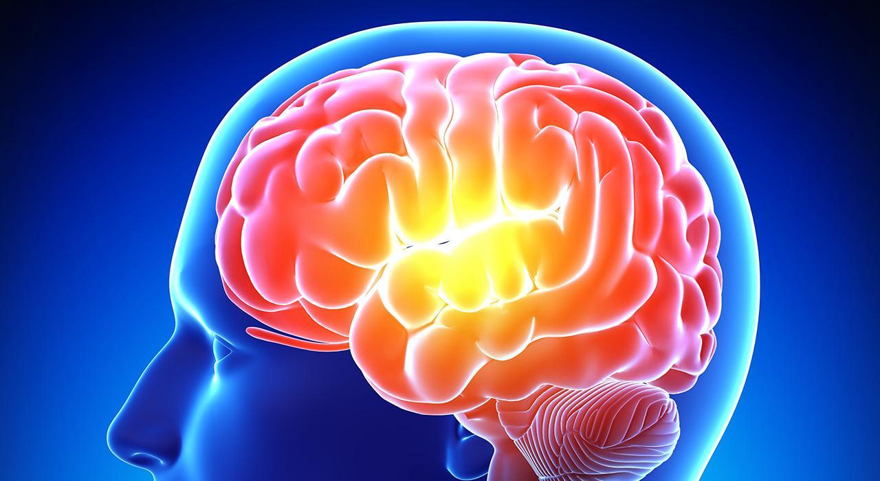 Formación en Emociones en los Procesos Neuroeducativos desde la Acción Motriz