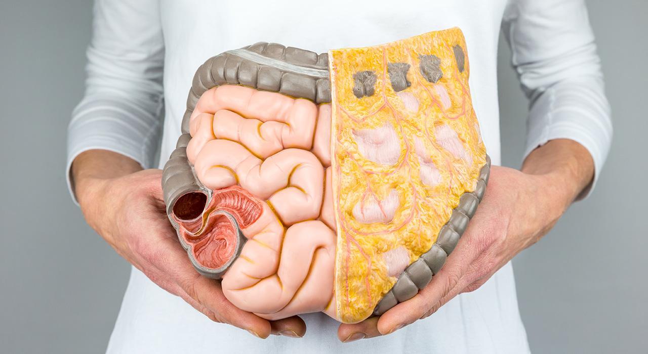 Diplomado en Microbiota y Homeostasis Intestinal