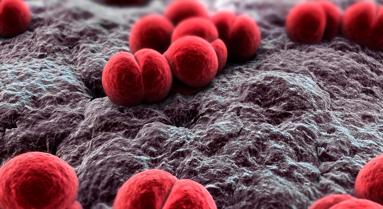 Diplomado en Microbiota, Intolerancia y Alergias