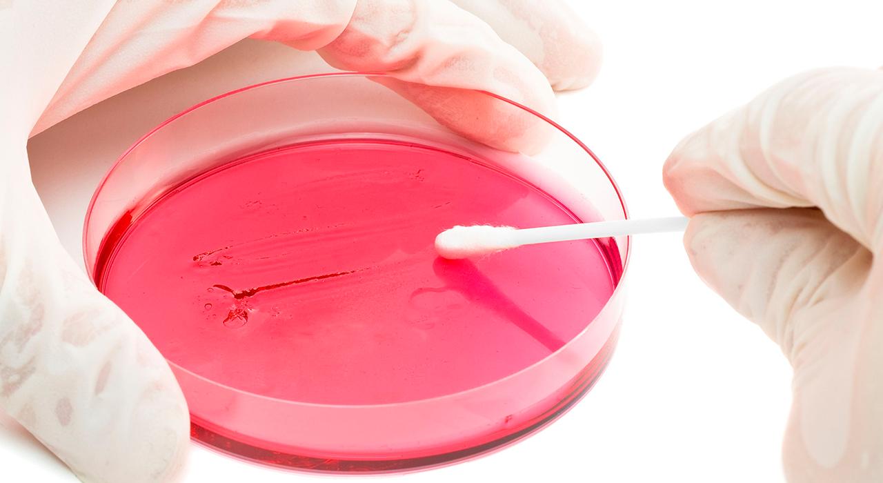 Maestría en Enfermedades Infecciosas y Tratamiento Antimicrobiano