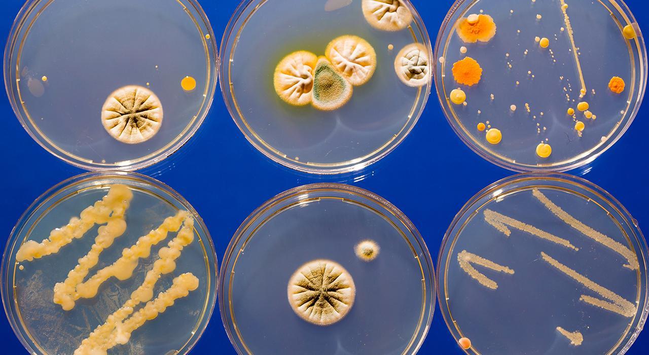 Diplomado en Probióticos, Prebióticos, Microbiota y Salud