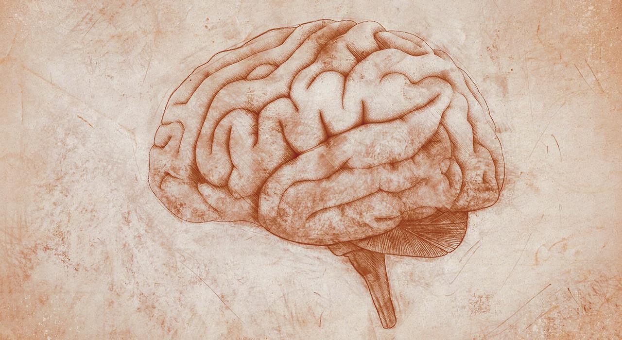 Posgrado en Neuroanatomía y Trastornos Mentales