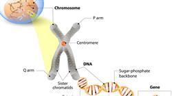 posgrado master genetica clinica