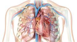 curso fitoterapia de las afecciones cardiovasculares y respiratorias