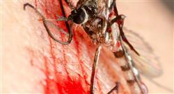 formacion drogas antimicrobianas para el tratamiento de las enfermedades tropicales