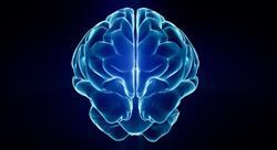 especializacion acción motriz en los procesos cerebrales del aprendizaje