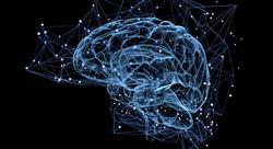 especializacion online acción motriz en los procesos cerebrales del aprendizaje
