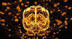 estudiar acción motriz en los procesos cerebrales del aprendizaje