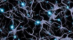 experto universitario acción motriz en los procesos cerebrales del aprendizaje
