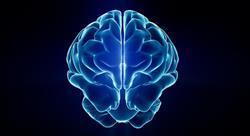 especializacion online neuroeducación prácticas motrices y desarrollo cerebral en medicina