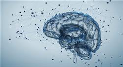experto universitario neuroeducación prácticas motrices y desarrollo cerebral en medicina
