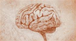 maestria neurociencias
