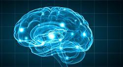 maestria online neurociencias