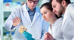 formacion enfermedades infecciosas y  microbiología en urgencias