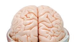maestria online medicina rehabilitadora en el abordaje del daño cerebral adquirido