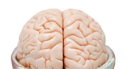 diplomado daño cerebral adquirido en geriatría para el  médico rehabilitador