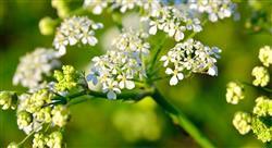 curso urgencias toxicológicas relacionadas con plantas setas y animales