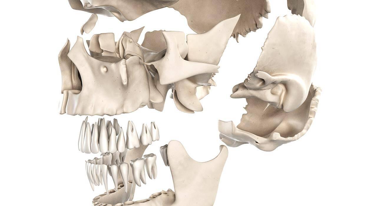 especializacion ortodoncia y cirugía ortognática