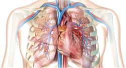 experto universitario fitoterapia de las afecciones cardiovasculares y respiratorias