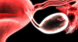 estudiar fitoterapia de las afecciones ginecológicas y del sistema urinario