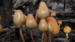 curso toxicidad plantas medicinales riesgo fitoterapia
