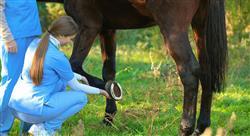 especializacion patologías locomotoras del caballo deportivo diagnóstico tratamiento y rehabilitación para fisioterapeutas