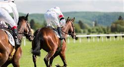 estudiar patologías locomotoras del caballo deportivo diagnóstico tratamiento y rehabilitación para fisioterapeutas