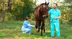 master rehabilitación equina para fisioterapeutas