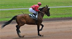 curso lesiones deportivas y manejo en el caballo para fisioterapeutas