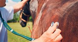 diplomado lesiones deportivas y manejo en el caballo para fisioterapeutas