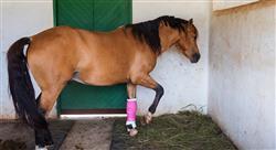 formacion lesiones deportivas y manejo en el caballo para fisioterapeutas