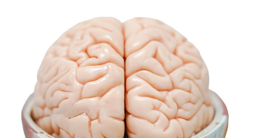 maestria online fisioterapia en el abordaje del daño cerebral adquirido