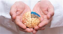 experto universitario intervención fisioterápico del daño cerebral adquirido
