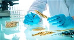 maestria online seguridad alimentaria nutricionistas