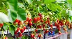 diplomado online validacion procesos sector agroalimentario nutricionistas