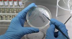 experto universitario microbiota intestinal para nutricionistas