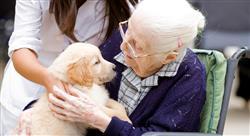 cursos intervención asistida por animales en terapia ocupacional