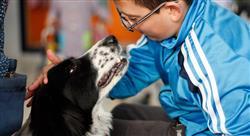 experto intervención asistida por animales en terapia ocupacional