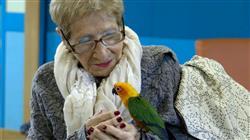 experto universitario intervencion asistidas animales ambito terapia ocupacional