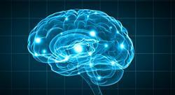 especializacion emociones y neuropsicología