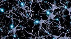 especializacion neuroeducación prácticas motrices y desarrollo cerebral en psicología