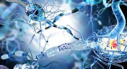experto neuroanatomia Tech Universidad