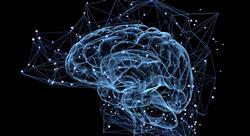 especializacion online neuroliderazgo y neuropolítica