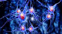 curso online bioquimica neuroanatomia Tech Universidad