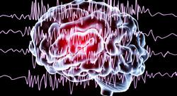 estudiar bioquimica cerebral docentes Tech Universidad