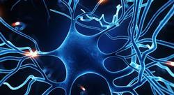 posgrado neuroeconomía