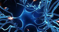 formacion neuroeducación